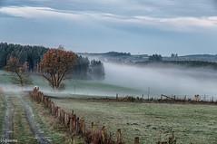 08112015-_DSC0008-Modifier (vidjanma) Tags: arbres automne brume chemin fagnoux matin vaches