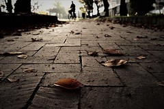 brick road (Sat Sue) Tags: olympus micro four thirds m43 penf japan fukuoka park fallen leaves leaf bike bicycle
