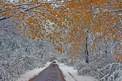 Magic Bike Ride (marylee.agnew) Tags: autumn snow golden leaves bike ride magic trail enchanted