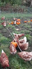 20191027_121606 (CSFS at UBC Farm) Tags: pumpkins