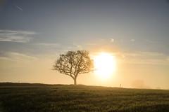 Petit matin d'automne (Croc'odile67) Tags: nikon d3300 sigma contemporary 18200dcoshsmc paysage landscape sunrise ciel sky brume mist arbre tree soleil nature leverdesoleil