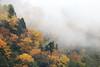 After rain (Teruhide Tomori) Tags: falls autumn landscape nature mountain forest tree toyama tateyama japan japon 称名滝 立山 中部山岳国立公園 日本 秋 自然 森 紅葉 teteyama 富山県 滝 fog mist 霧
