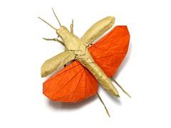 Flying Grasshopper - Brian Chan (Mariano Zavala B) Tags: flying grasshopper langosta brian chan locust saltamontes origami tutorial