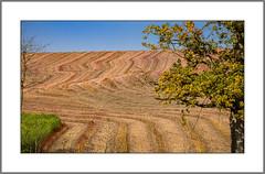 Herbstfeld (autumn field) (alfred.hausberger) Tags: feld herbst maisfeld strukturen