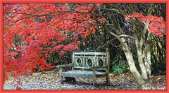 Nice spot to have a rest (maryimackins) Tags: autumn colours sheffield park mary mackins
