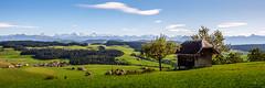 Bienenhaus mit Aussicht (uhu's pics) Tags: panorama schweiz bern alpen aussicht landschaft wald emmental hügel gumm fernsicht biglen xpro fuji fujifilm xf16mmf14 switzerland view alps hills forest landscape mountains berge beehouse