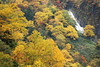 Autumn trees (Teruhide Tomori) Tags: autumn falls mountain tree nature japan forest landscape 日本 toyama 秋 japon tateyama 立山 称名滝 中部山岳国立公園 mist fog 紅葉 自然 滝 森 霧 富山県 teteyama