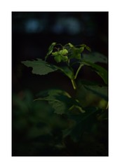 This work is 15/15 works taken on 2019/9/23 (shin ikegami) Tags: sony ilce7m2 light shadow nature iso800 tokyo voigtlander 40mm 自然 nokton sonycamera naturephotography ndfilter a7ii 単焦点 nokton40mmf14sc 玉ボケ portrait art japan asia bokeh earth depthoffield artphotography portraitphotography