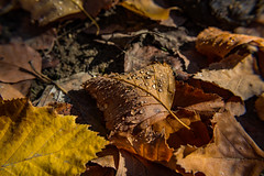 Out Of Nowhere (davidseibold) Tags: america bakersfield california canonrebelt3i freshwater jfflickr kerncounty leaf nature photosbydavid platoct postedonello postedonflickr unitedstates usa water