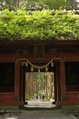 Gateway (jedrek.morzy) Tags: japan togakushi avenue trees gate pathway passage door nature fareast gateway