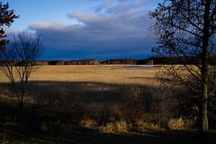 813D32C7-B4FB-4ABC-9508-6EA65E739C3E (Sandhill Pictures) Tags: minnesota fall autumn november water reeds blue golden goldenhour landscape sony a7riii zeiss batis batis240