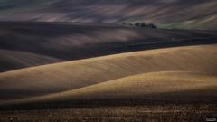 Moravian fields (tomaszpluta1) Tags: moravia fields morawy czech republic