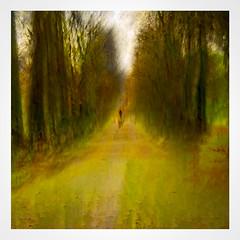 Autumn has fallen (1 of 1) (ianmiddleton1) Tags: autumn fall glasgow icm