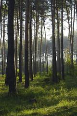In the woods (Slav.Burn) Tags: woods forest autumn sunlight trees grass green pentaxart smcda50mmf18