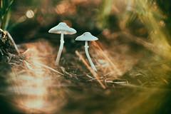 Better Together... (Sarah Rausch) Tags: smileonsaturday mushroom sony macro bokeh warm tamron90mmmacro tamronspaf90mmf28dimacro11 sos hsos depth