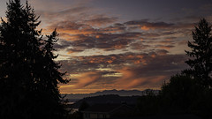PNW Sunset (LifeLover4) Tags: silhouette sunset trees pugetsound outside clouds