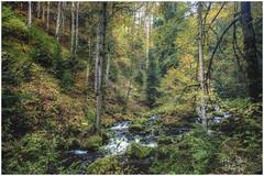 Hiking the Ravenna Gorge (HikerandBiker) Tags: autumn canon canonrf24105f4lisusm eosr forest herbst hiking pzphotography ravenna ravennagorge ravennaschlucht wald woodland wandern