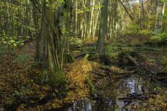 Autumn Forest (Slav.Burn) Tags: woods forest autumn october trees stream leaves pentaxart smcfa28mmf28