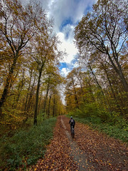 inside forest . (helmet13) Tags: iphone11 autumn fall forest trees colors foresttrack woman she mountainbike bicycle cycling leaves aoi peaceaward wideangle world100f