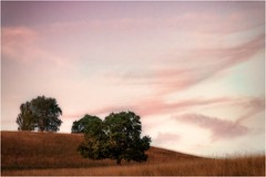 Pink (linke64) Tags: thüringen deutschland germany gras natur landschaft himmel hügel wolken wiese wolkenhimmel bäume baum pink