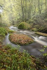 Les Gorges de Toul Goulic (Yohann Hamonic) Tags: yohannhamonic yhamophotos automne autumn bretagne bzh blavet valléedublavet rivière river pose longue long exposure brume