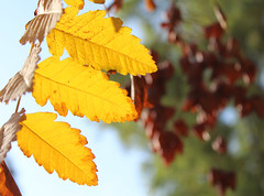 Autumnal veins (Argyro Poursanidou) Tags: stripes leaf leaves foliage colorful nature yellow autumn light veins φύλλα φθινόπωρο φύση κίτρινο