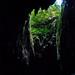 Clearwater Cave - Gunung Mulu Nationalpark, Borneo