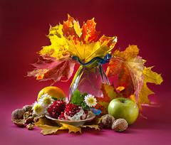 1-still-autums-leaves-645D9567-LR6-md2-stack (John Igor) Tags: mamiya sekor rz67 67 110mm f28 stillife medium format fall leaves autumn