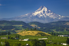 August in the Hood River Valley (RobertCross1 (off and on)) Tags: a7rii alpha cascaderange cascades columbiarivergorge e55210mmf4563oss emount hoodriver hoodrivervalley ilce7rm2 mounthood mthood nationalscenicarea or oregon pacificnorthwest pinegrove sony bluesky forest fullframe glacier landscape mirrorless mountains orchards peak pears snow trees volcano
