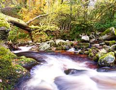Glorious Autumn Colour (sineid2009) Tags: autumn colour trees river longexposure wicklow ireland