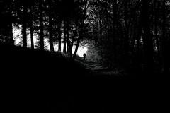 E quindi uscimmo.. (giovannazorzenon) Tags: dante persona bosco buio