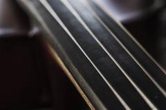 The study of light (macro sleuth) Tags: viola strings micro macro selectivefocus shallowdepthoffield violastrings scherlandrothviola fun joy music musicmacro nearsightedlook musicmajor instrument musicinstrument studyoflight violinbridge filmlook optics