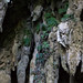 Monophyllaea pendula (One-leaf plant) vor dem Eingang der Clearwater Cave - Mulu Nationalpark, Borneo, Malaysia