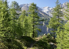 Through the mountain forest (evakatharina12) Tags: wallis valais switzerland randa wildikin alps mountains forest wood larches summer