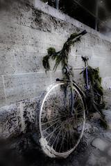 Found it again .... (vale0065) Tags: bicycle fiets water donau regensburg germany duitsland transport transportation vervoer vervoersmiddel mud slijk modder bavaria beieren river rivier stream stroom voertuig rust rusty roest roestig lost verloren