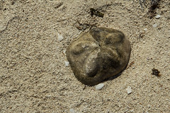 DryTortugas_163 (rvogt0505) Tags: drytortugasnationalpark nationalpark drytortugas florida beach sand shell