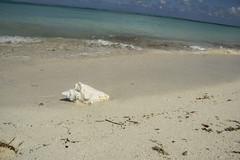 DryTortugas_157 (rvogt0505) Tags: drytortugasnationalpark nationalpark drytortugas florida beach sand shell