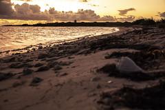 DryTortugas_134 (rvogt0505) Tags: drytortugasnationalpark nationalpark drytortugas florida sunset beach ocean shell sand