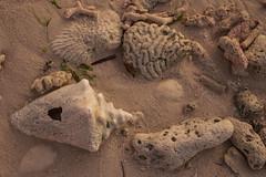 DryTortugas_129 (rvogt0505) Tags: drytortugasnationalpark nationalpark drytortugas florida sunset beach shell sand