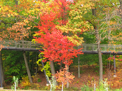 upward bound (Bruces 51) Tags: whiting forest dow gardens midland michigan canopy walk