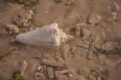 DryTortugas_126 (rvogt0505) Tags: drytortugasnationalpark nationalpark drytortugas florida sunset beach shell sand