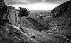 Doris goes to Holwick . (wayman2011) Tags: colinhart fujifilm35mmf2 fujifilmxt1 lightroom5 wayman2011 bwlandscapes mono rural dogs doris jackrussels pennines dales teesdale holwick countydurham uk