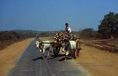 near Kyaiktiyo, Burmese road conditions (blauepics) Tags: myanmar birma burma southeast asia südostasien 1996 yangon kyaiktio kyaiktiyo burmese street strasse lane bahn oxcarts ochsenkarren poverty armut farmer bauern traffic transport verkehr