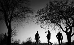 silhouettes & nature (christikren) Tags: blackwhite christikren candid dark human noiretblanc men nature silhouette tree austria black