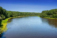 Wabasca River (Bracus Triticum) Tags: wabasca river アルバータ州 alberta canada カナダ 8月 八月 葉月 hachigatsu hazuki leafmonth 2019 reiwa summer august