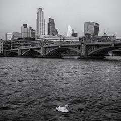 Swan Song (sdupimages) Tags: blackwhite noirblanc noiretblanc composition square carré bw nb monochrome signe swan londres london street rue
