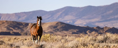 Shades-of-Autumn (chad.hanson) Tags: wildlife wyoming wildhorses horses horse mustangs mustang