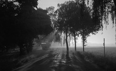 Misty sunrise (Rosenthal Photography) Tags: asa400 kleinbildformat ff135 ilfordlc2912920°c12min 20190905 schwarzweiss ilfordhp5 ilfordrapidfixer olympus35rd analog epsonv800 mistysunrise mistymirror sunrise mist fog morning sun sunshine september summer field trees road way path landscape olympus olympus35 35rd fzuiko zuiko 40mm f17 ilford hp5 hp5plus lc29 rapid fixer epson v800
