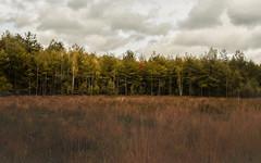 Autumn-7129 (EB_Creation) Tags: autumn nikon nikond7500 d7500 nikon1680mm 1680284eifedvr 1680mmf284evr nikkor 1680284 e ifed vr nikkor1680mmf284evr nature outdoor outside