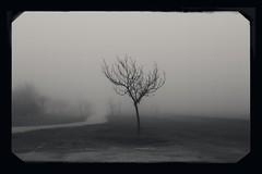 (una cierta mirada) Tags: canon eos 6d ef 50mm f14 usm landscape tree bnw blackandwhite nature fog foggy mist